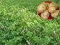 马铃薯淀粉废水处理方法